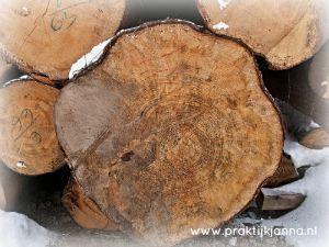 jaarringen in een omgezaagde boom